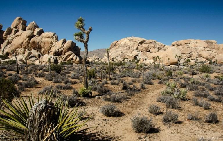 Hall of Horrors Joshua Tree National Park California