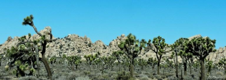 Wall of boulders Hidden Valley Joshua Tree National Park California