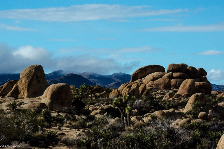 Boulders White Tank campground Joshua Tree National Park California