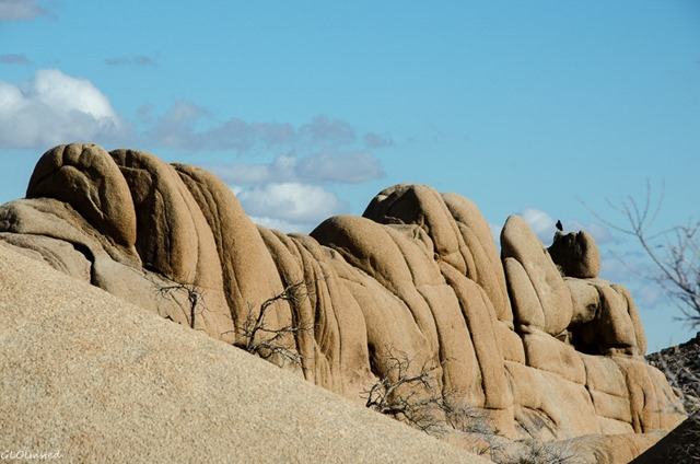 Raven on boulders Jumbo Rocks campground Joshua Tree National Park California