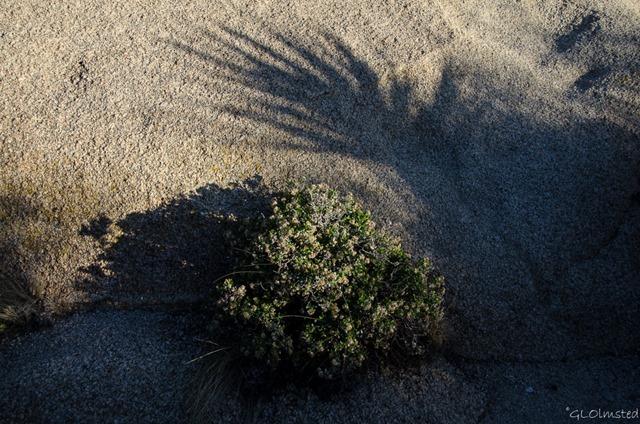 Shadows on rock Jumbo Rocks Campground Joshua Tree National Park California