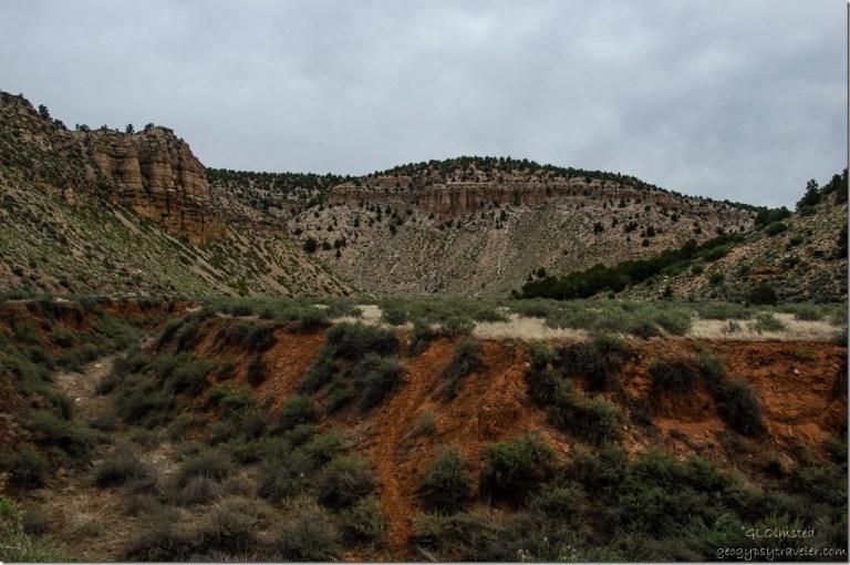 Snake Gulch Kaibab National Forest Arizona