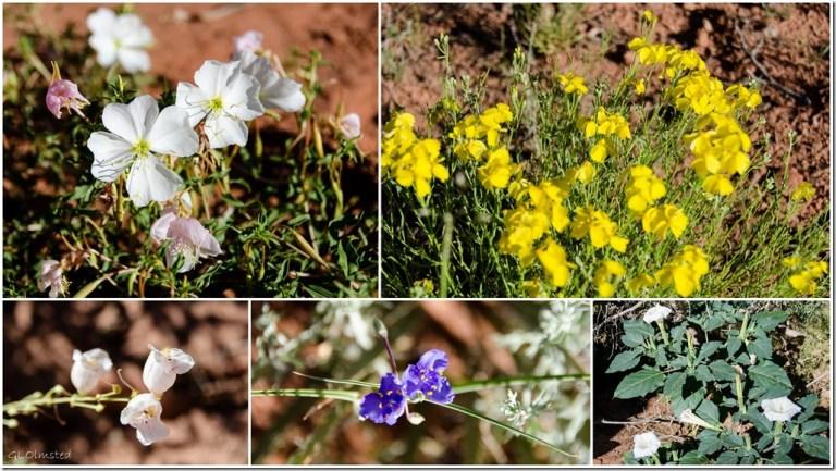 Flowers Bunting Trail Kanab Utah