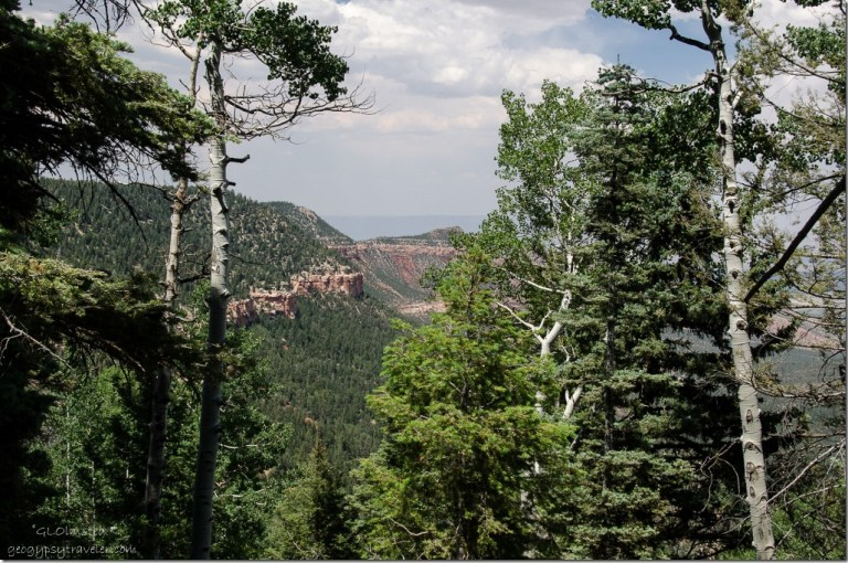 Saddle Mountain through the trees Arizona Trail Kaibab National Forest Arizona