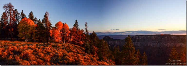 Last light at sunset on fall aspen North Rim Grand Canyon National Park Arizona