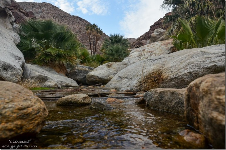 Palms & running water in wash Borrego Palm Canyon trail Anza-Borrego Desert State Park California