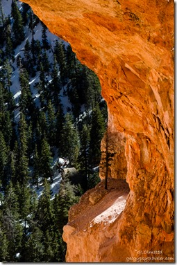 Tree Natural Arch Bryce Canyon National Park Utah
