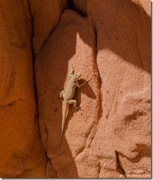 Lizard White Pocket Vermilion Cliffs National Monument Arizona