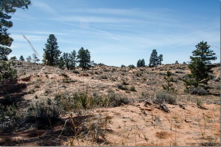 Sand dunes Utah