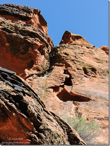 Looking up from camp shade Snow Canyon State Park Utah