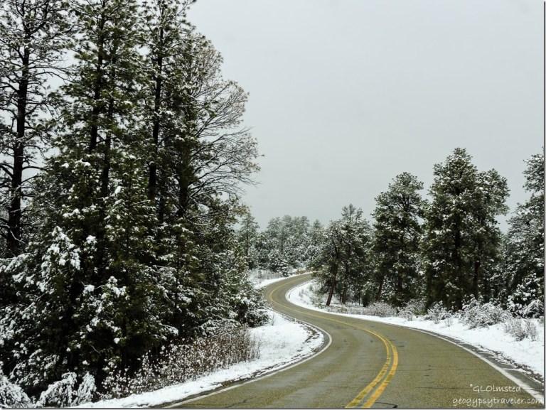 Snow SR89A North Kaibab National Forest Arizona