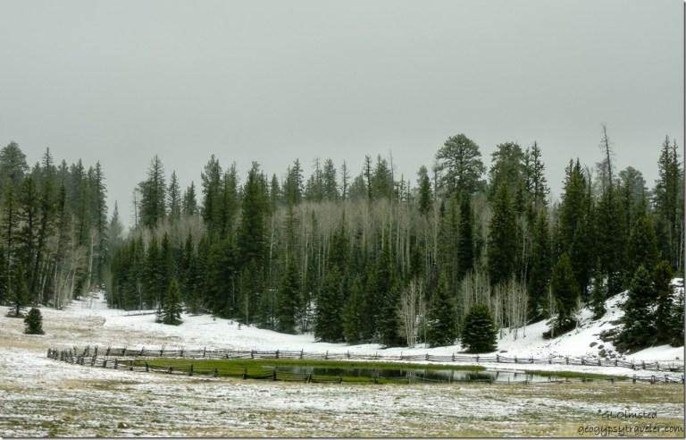 Snow Crane Lake SR67 Kaibab National Forest Arizona