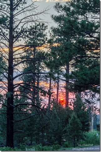 Sunset thru trees Point Imperial North Rim Grand Canyon National Park Arizona