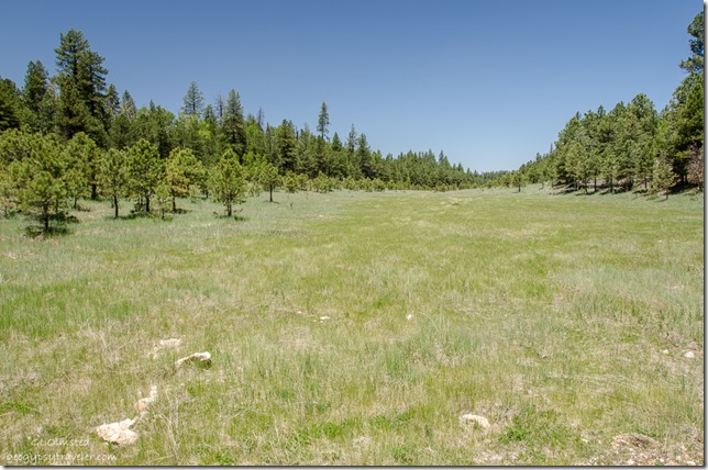 Meadow Kaibab National Forest Arizona