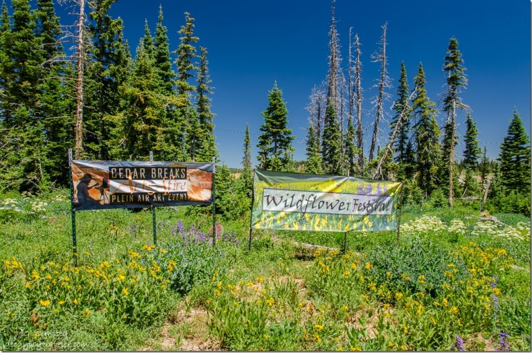 Signs Plein Air Art Event & Wildflower Festival Cedar Breaks National Monument Utah