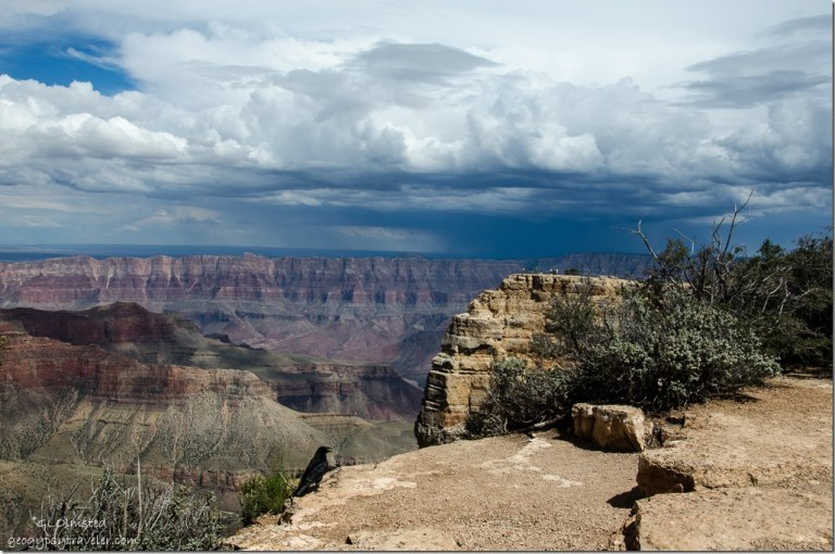 Stormy sky & Raven Cape Royal North Rim Grand Canyon National Park Arizona