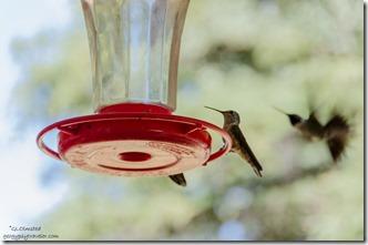 Hummingbirds Duck Creek Visitor Center Dixie National Forest Utah