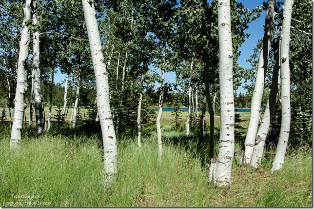 Duck Lake thru trees Dixie National Forest SR14 Utah