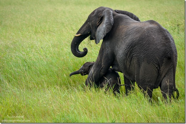 Elephant with baby Kruger National Park South Africa