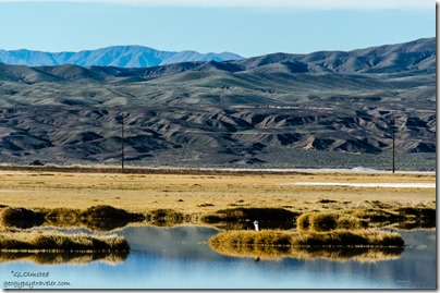 Heron wetlands Tecopah California