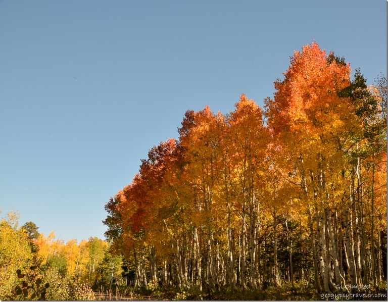 Fall colors along FR610 Kaibab National Forest Arizona