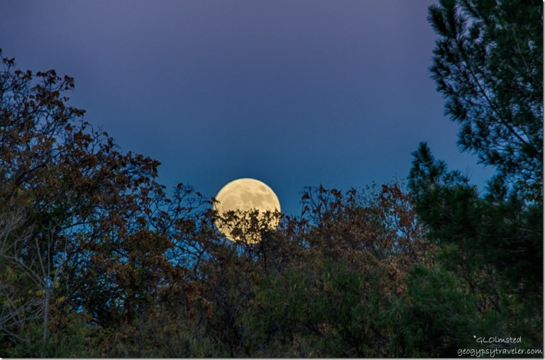 Supermoon rising behind trees Kirkland Arizona