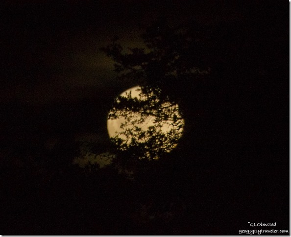Super moon rise behind trees Yarnell Arizona