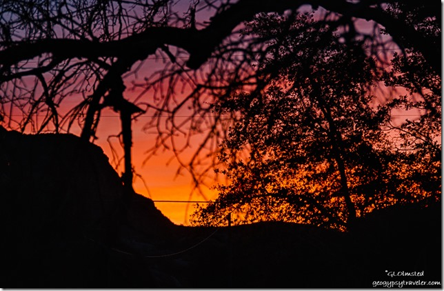 Sunrise through trees Yarnell Arizona