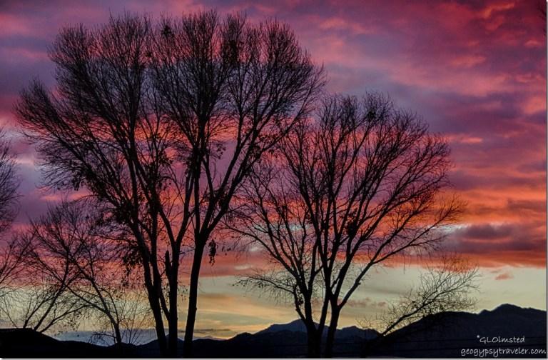 Sunset through trees mountains Kirkland Arizona