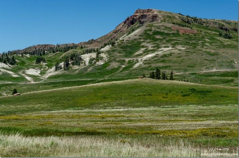 Meadow Brians Head Cedar Breaks National Monument Utah