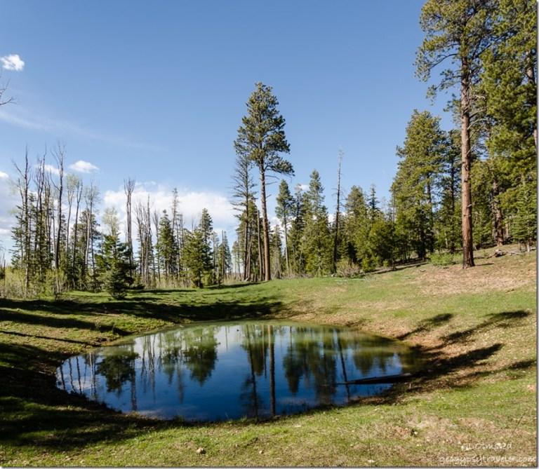 pond forest FR241 East Kaibab National Forest Arizona