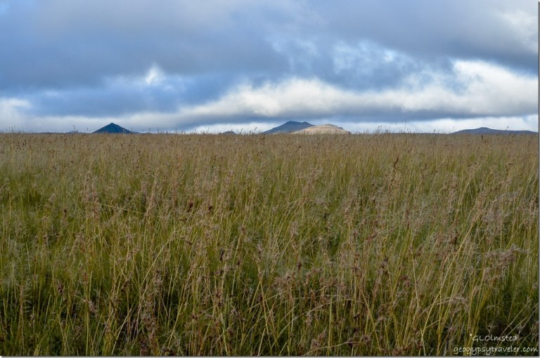 Tall grasses Mountain Zebra National Park South Africa