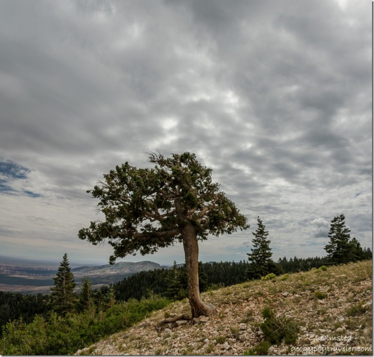 clouds Marble View Kaibab National Forest Arizona