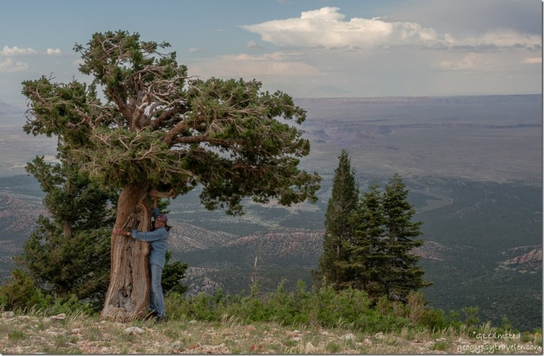Gaelyn old pinyon pine valley Echo Cliffs storm Marble View Kaibab National Forest Arizona