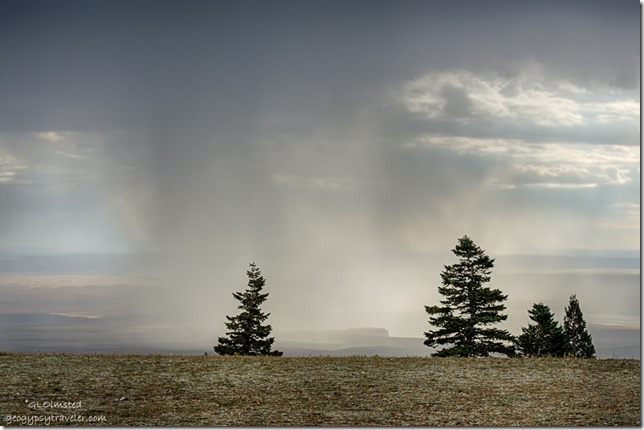 rain Marble View Kaibab National Forest Arizona