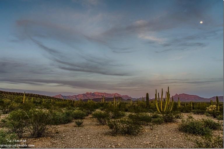 Sunset light Ajo Range & moon Organ Pipe Cactus National Monument Arizona