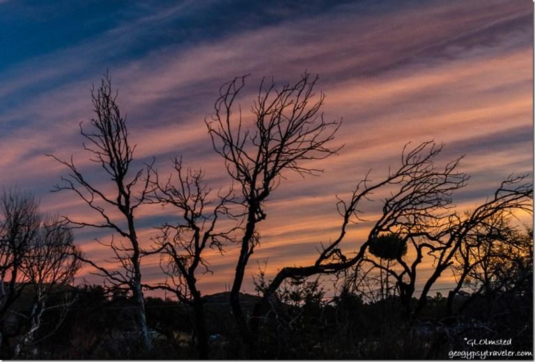 trees sunset Yarnell Arizona