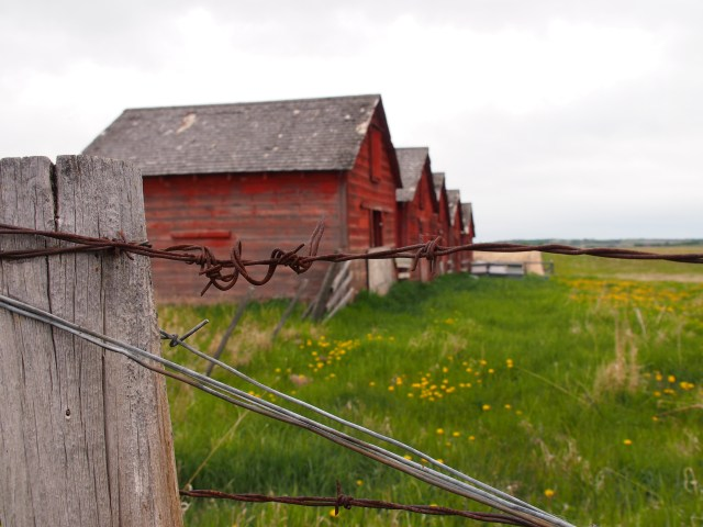 Five red sheds