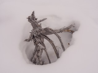 Twisted and weathered branches poked up through the snow.