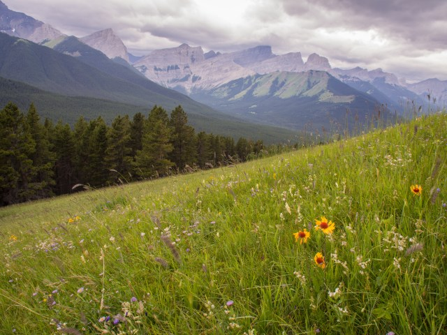 Brown-eyed Susans low in the grassy meadows on Pigeon Mountain. Looking west to Wind Ridge and Three Sisters.