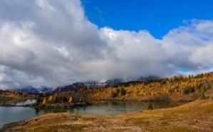 Sunshine-Meadows-Larch