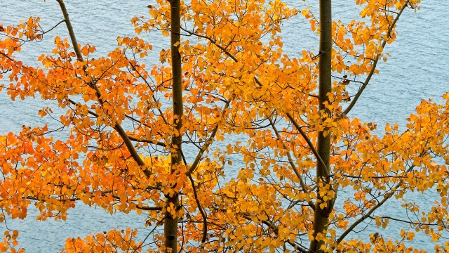 orange leaves and turquoise water