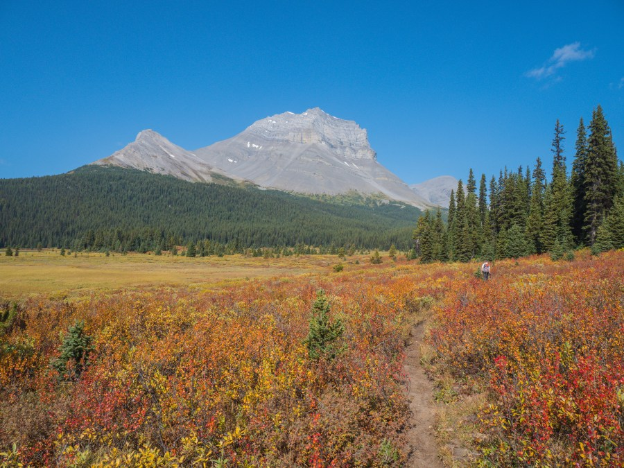 man walking through mountain meadow in autumn