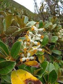 Local flora. Tracey Benson © 2013013