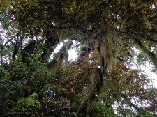 Amazing lichen. Martin Drury © 2013