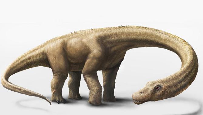 Representación en 3D del Dreadnoughtus schrani, un dinosaurio herbívoro que probablemente pasó gran parte de su vida comiendo grandes cantidades de plantas para mantener su enorme tamaño corporal. / Mark A. Klingler, Museo Carnegie de Historia Natural.
