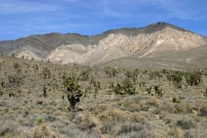 Triassic metavolcanic rock of the southern Sierra Nevada.