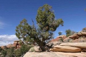 Southern Utah cracks