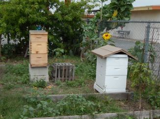 Bee hive. South 40 Community Garden.