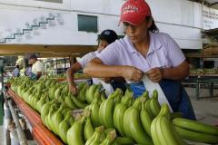 Women labeling bananas in Latin America. Image from www.ibtimes.com